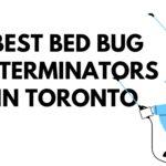 The 5 Best Bed Bug Exterminators in Toronto